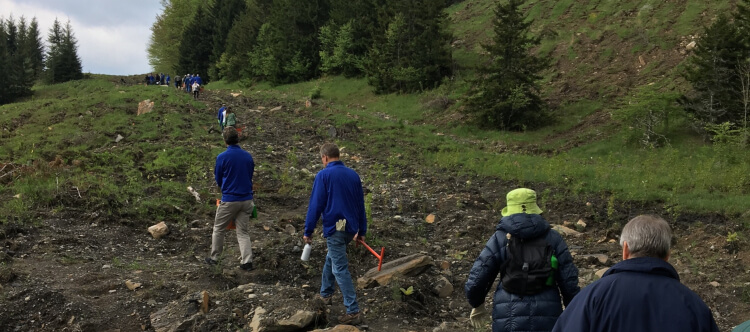 Komatsu Mining executives volunteering with Green Forests Work